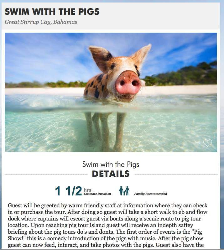 Swimming with pigs via Great Stirrup Cay - Norwegian Cruise