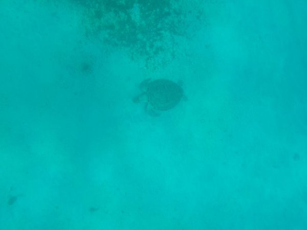 Sea Turtle, St Thomas, USVI