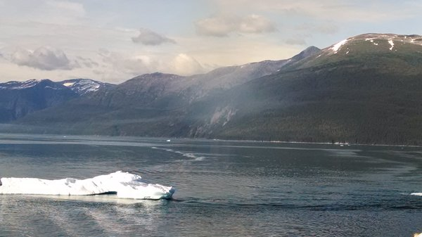 Tracy Arm Fjord.  Iceberg or Sea Monster?
