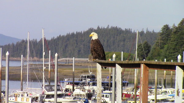 Alaska/Pacific Coast Port of Call Photos