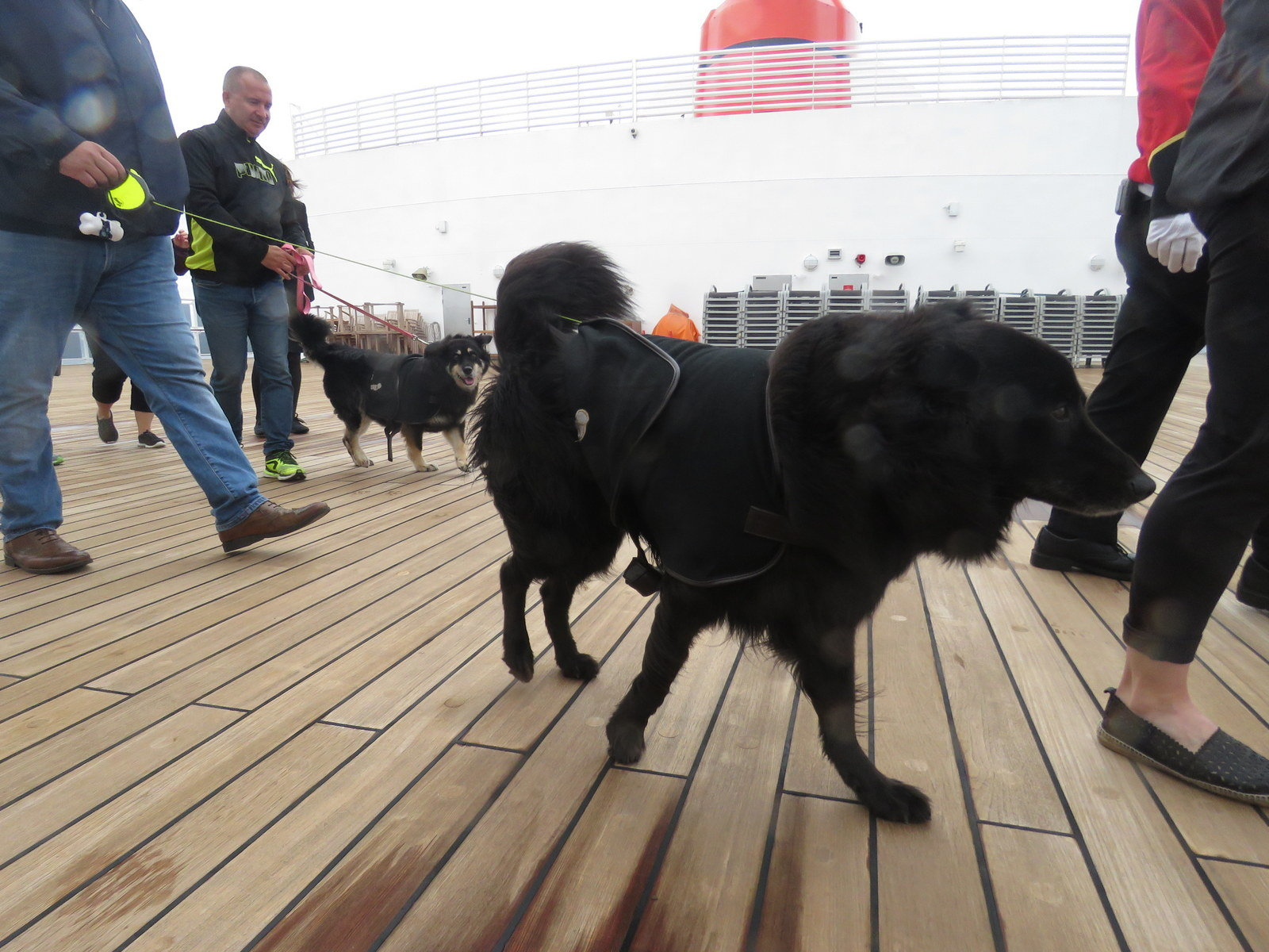 Dog parade on Queen Mary 2