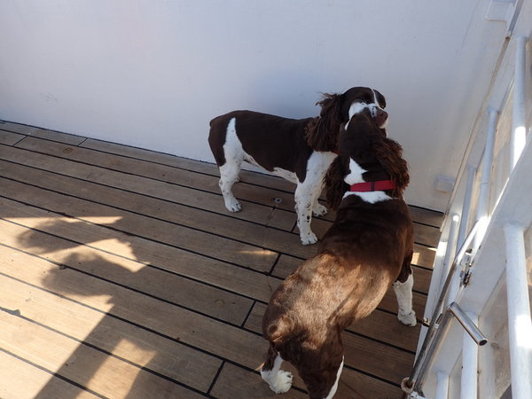 Dog's travelling on the Queen Mary 2