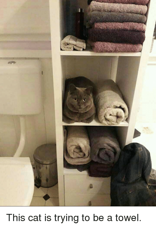 this-cat-is-trying-to-be-a-towel-37784794.png.13cb122f6cd8b8bef767901024adc251.png