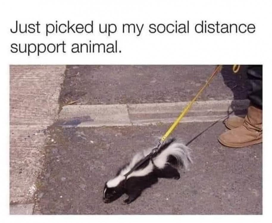 social distance support animal.jpg
