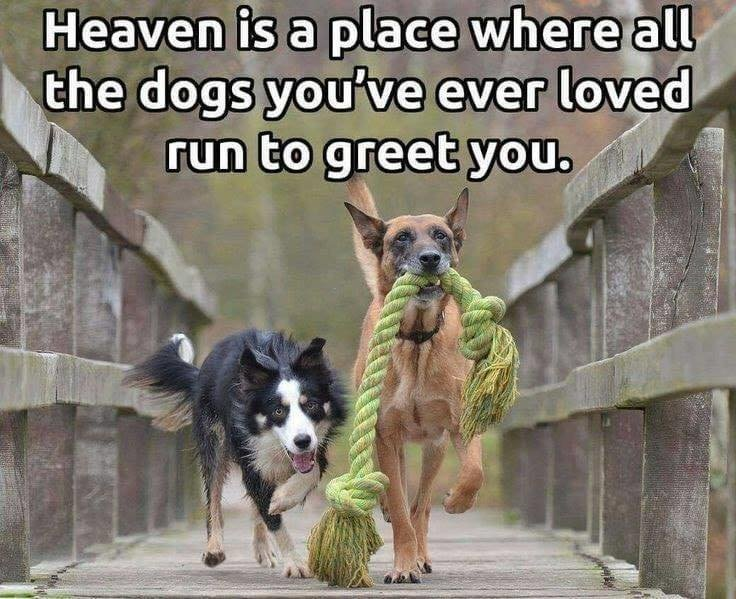 heaven is a place where the dogs.jpg