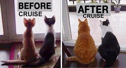 before cruise after cruise skinny cats fat cats.jpg