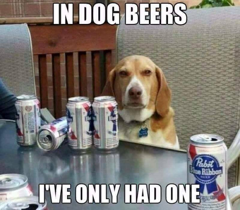 in dog beers.jpg