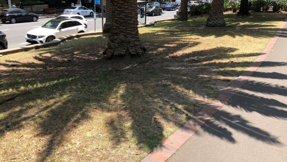 Tree Shadow.jpg