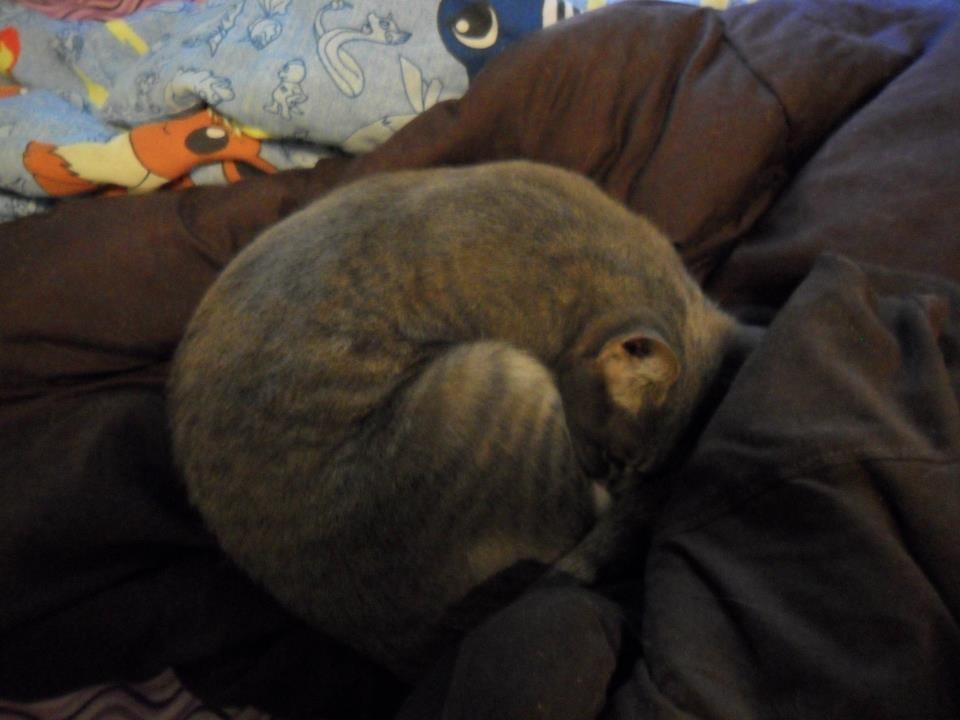 Mims curled into a tight little ball