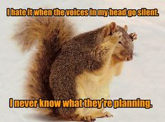 squirrelvoices