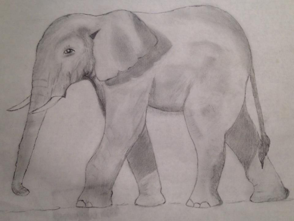 Elephant in graphite