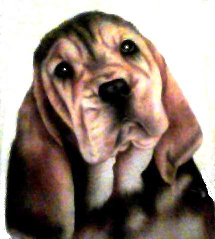 bloodhound puppy.jpg