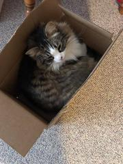 This cat thinks inside the box <3