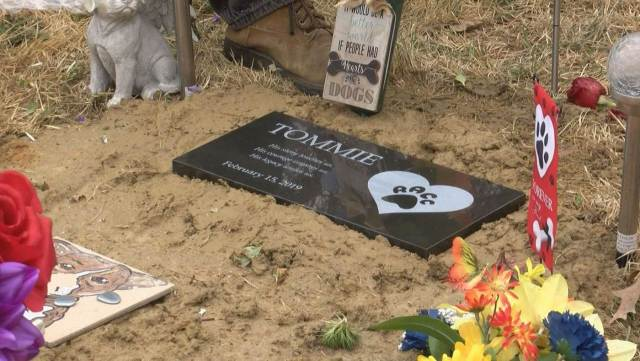 Tommy the pit bull's grave.jpg