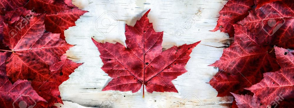 36567375-a-canada-flag-made-from-real-red-maple-leafs-on-a-birch-bark-background-.jpg