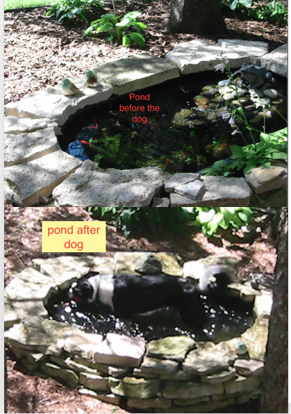 pond dog.png