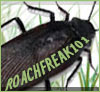 Roachfreak101