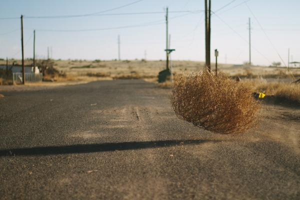 tumbleweed_in_west_texas_grande.jpeg