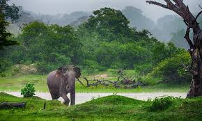 Sri Lanka elephant images.jpg