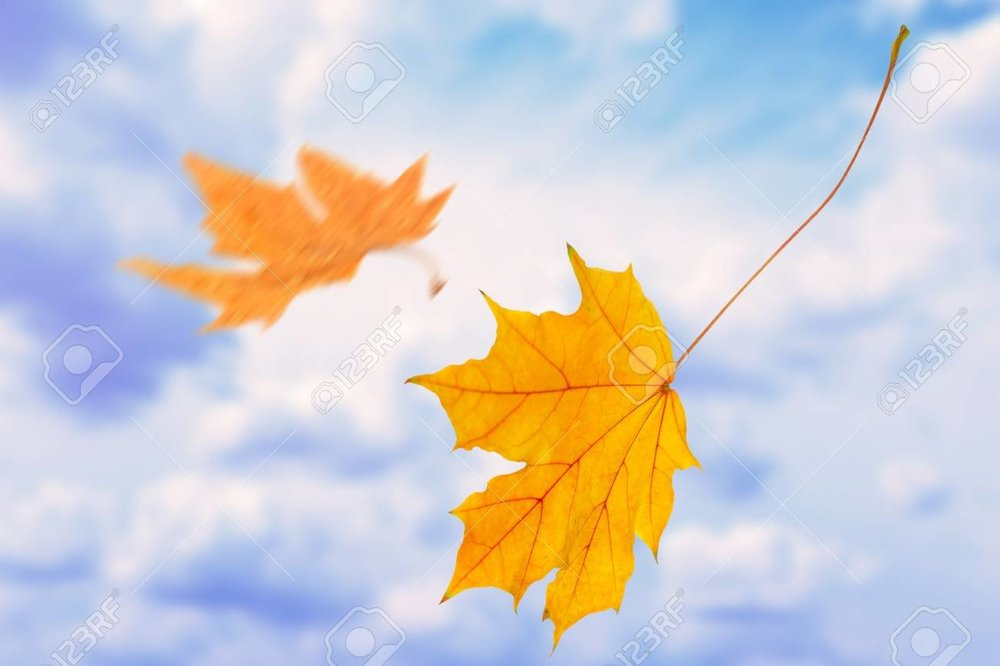 44452420-beautiful-autumn-leaves-flying-on-a-wind.jpg