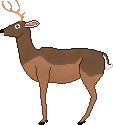 58d289945b500_Male-White-TailedDeer.png.64349ab6a9bfc0481529e4872609942d.png