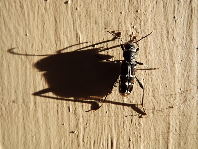 BUG w-SHADOW (800x600).jpg