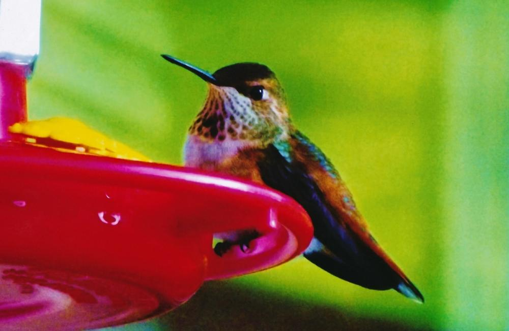 HUMMING BIRD SCAN_20170821_0001 (1280x834).jpg