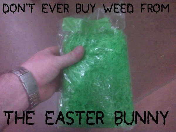 weed-easter-bunny-funny-weedmemes.jpg