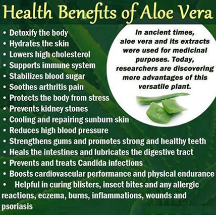 benefits-of-aloe-vera.jpg.443b0c3b9dbaa7634973001e6ae507c6.jpg