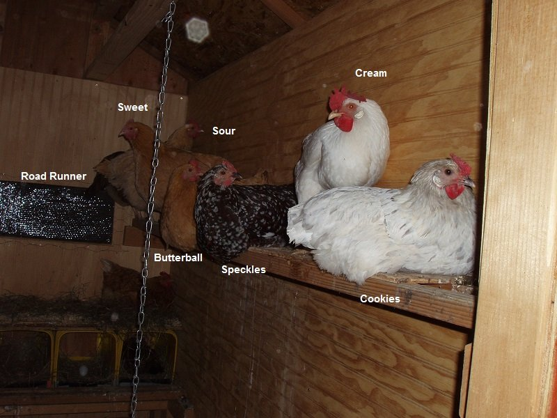 10 24 2018 hens going to bed names 1b.jpg