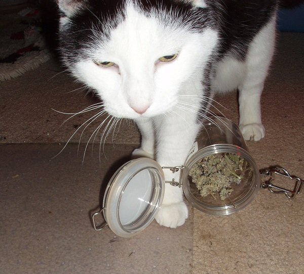5 29 2018 Moose cat nip jar 1b.jpg
