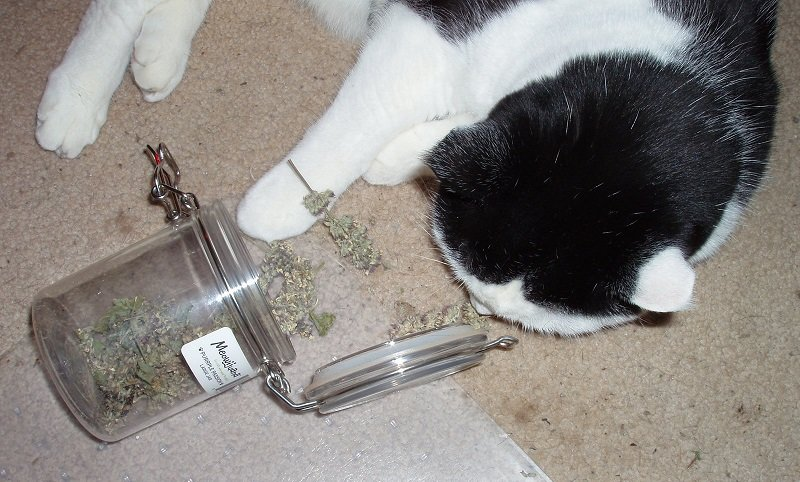 5 29 2018 Moose cat nip jar 1e.jpg