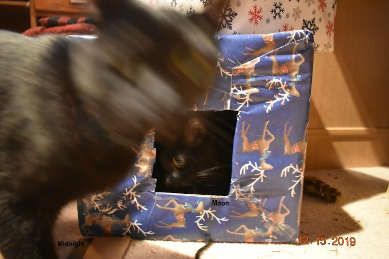 12 15 2019 Kittens vs box 1.jpg