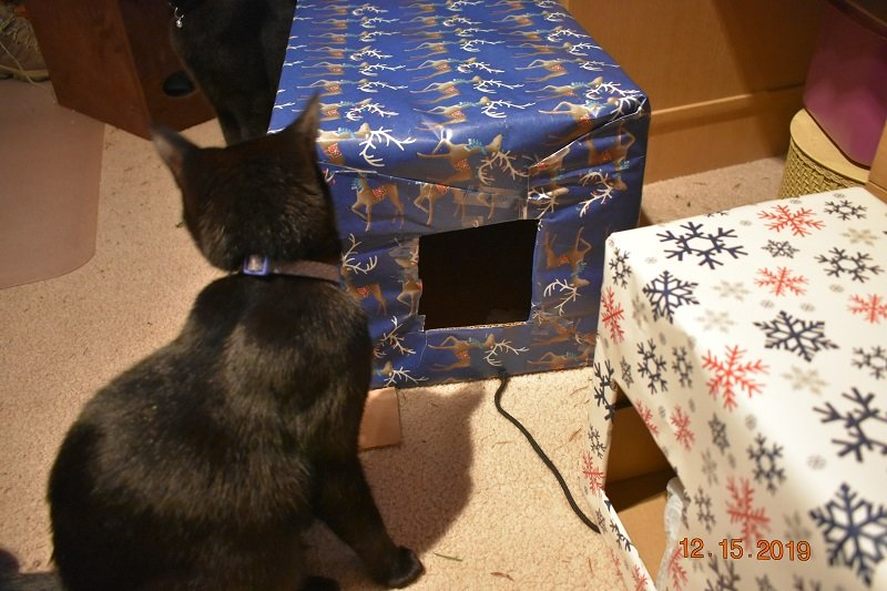 12 15 2019 Kittens vs box 1b.jpg