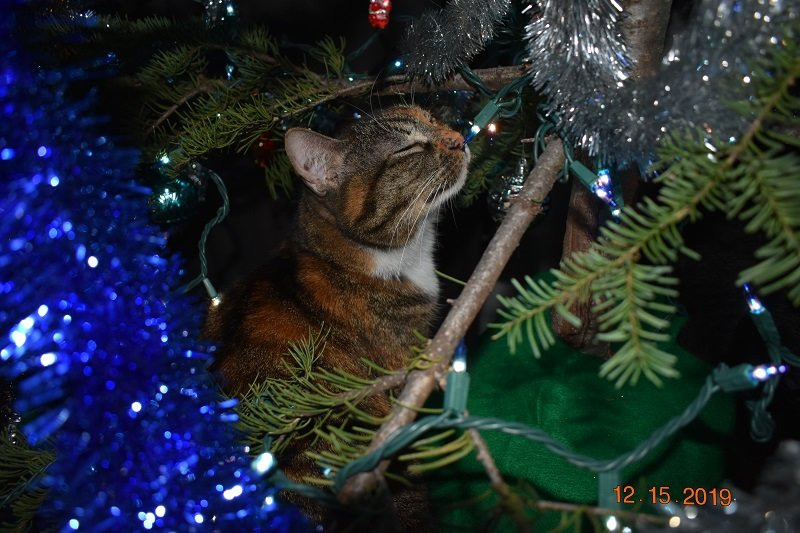 12 15 2019  cats with tree 1j.jpg