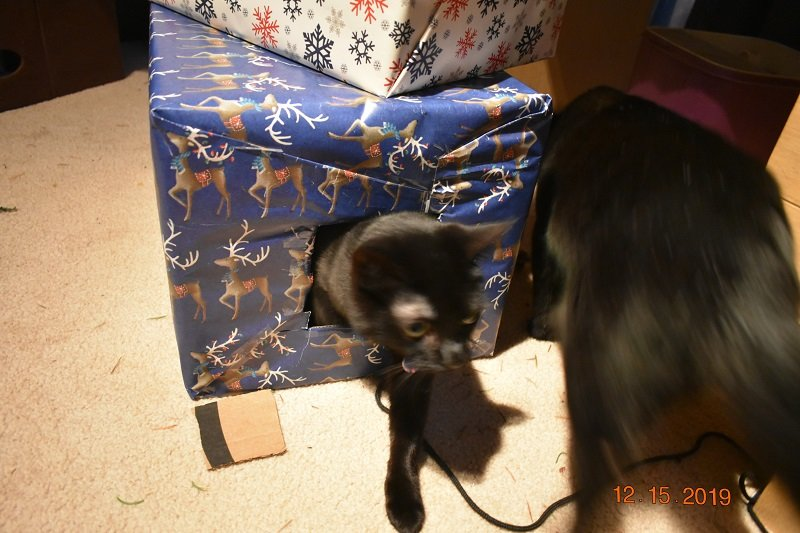 12 15 2019 Kittens vs box 1a.jpg