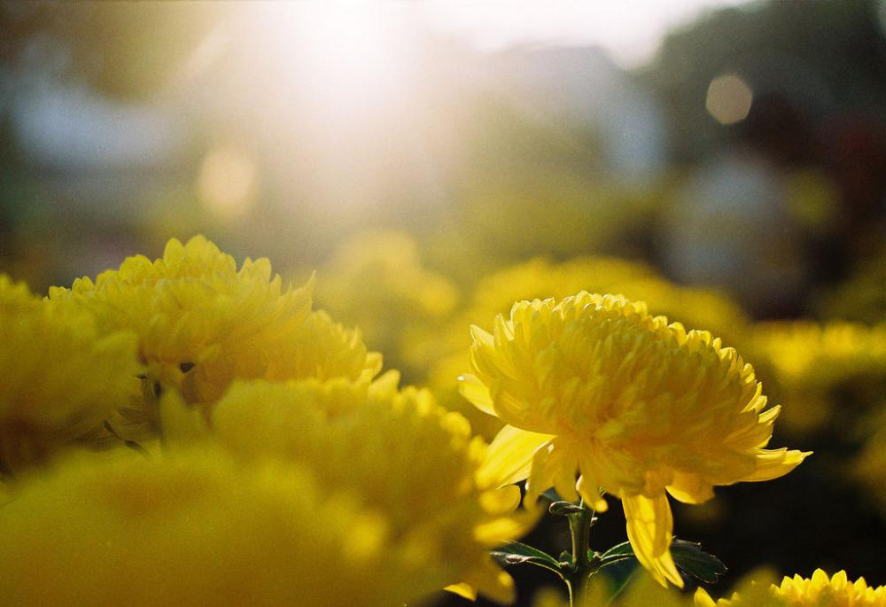 yellow-flower-and-the-sun.jpg
