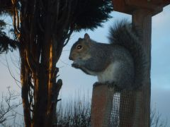 Squirrel 6