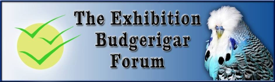 Exhibition Budgerigar Forum