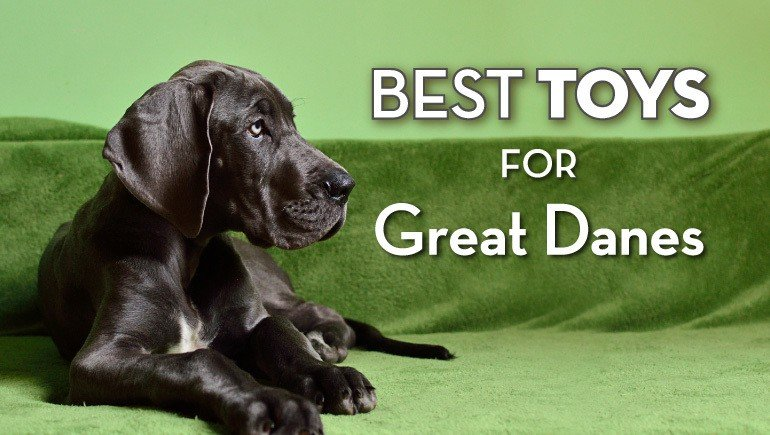 best-toys-for-great-danes.jpg