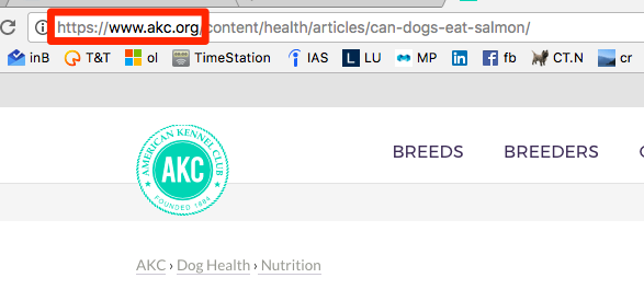 Can_Dogs_Eat_Salmon__-_American_Kennel_Club.png