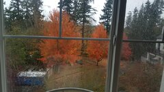 November View from Painting Desk.jpg