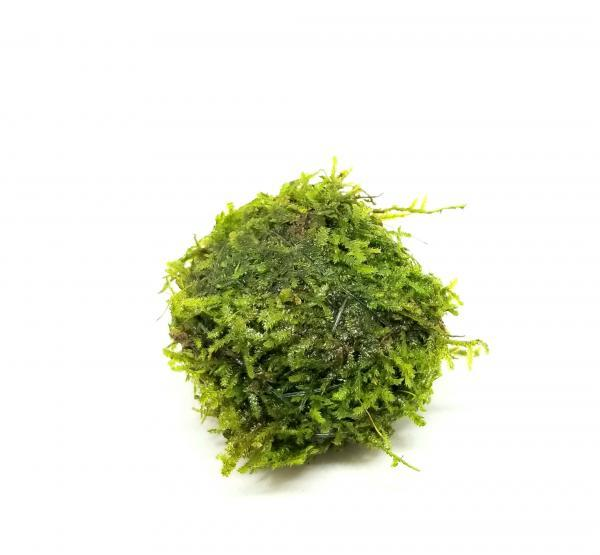 Floating Xmas Moss Ball