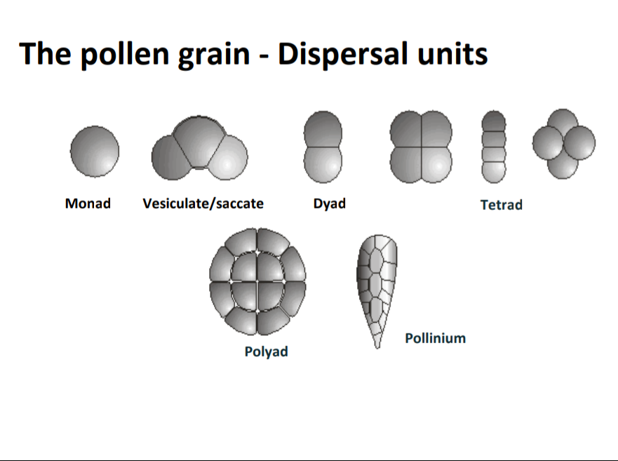 pollen dispersal units.png