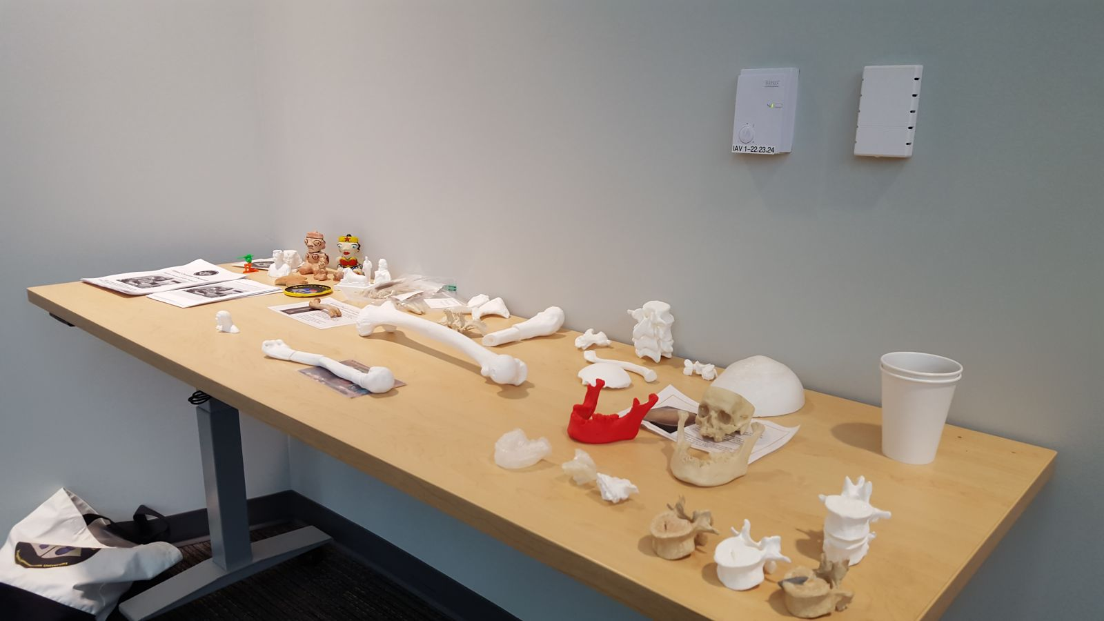Table of 3D printed bones