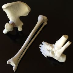 hip, tibia-fibula, and ankle