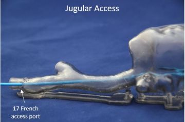 02   Jugular Access