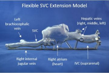 01   Flexible SVC Extension Model