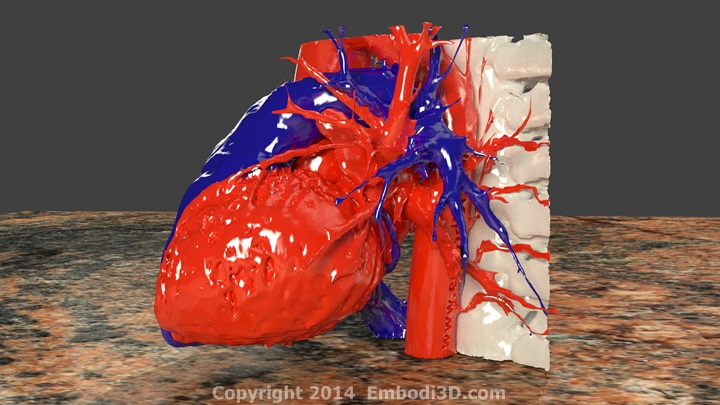 3d printable human heart model - 3d printing in medicine,