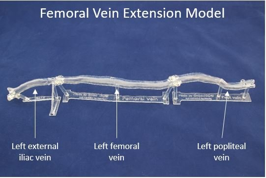 Femoral Vein Extension Model